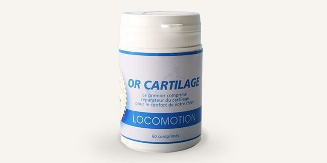 or-cartilage1_home